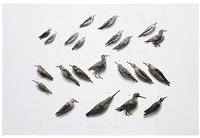 bird no. 1 by guo hongwei