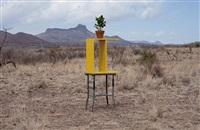 local plants (texas mountain laurel) by florian slotawa