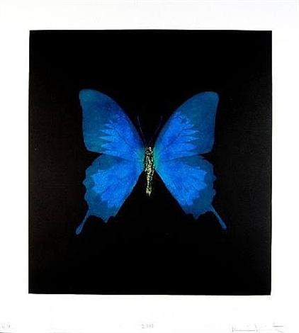 unique teal butterfly by damien hirst