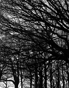winter hampstead heath, london by hélène binet