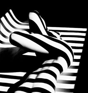 zebra 14 by francis giacobetti