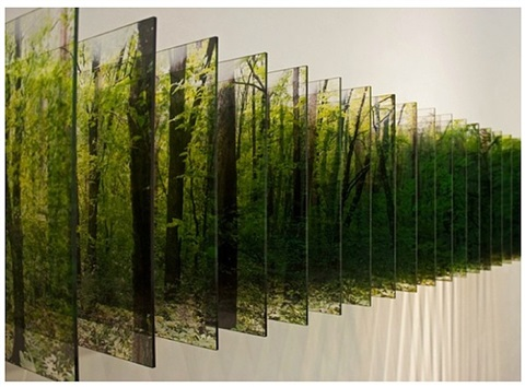 layer drawing, light of the forest by nobuhiro nakanishi
