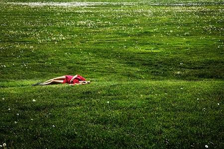 field of dreams by david drebin