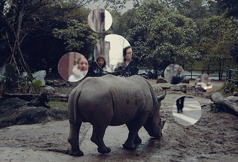 self reflection (rhinoceros) by john clang