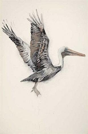 pelican by john alexander