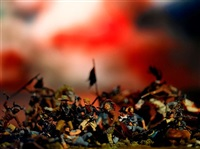 custer's last stand from the series wild west by david levinthal