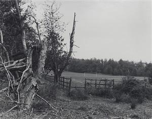 the forest by keith arnatt