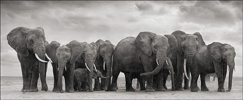 elephant group on bare earth, amboseli by nick brandt