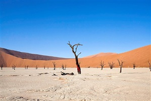 the bleeding tree - namibia by alfredo destéfano