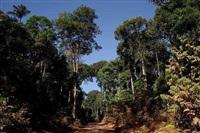roads of amazonia 2 by sergio vega