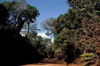 roads of amazonia 4 by sergio vega