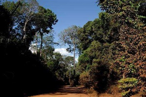 roads of amazonia 4 by sergio vega