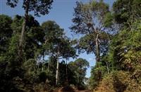 roads of amazonia 6 by sergio vega