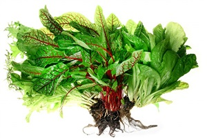 salad - bushel of life by alex geana