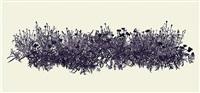 black poppy by andrew millner