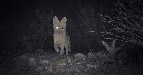 fox, 10:42 pm, june 2, 2011 by kate breakey