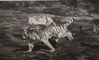 free tiger returns to mountains by zhang huan