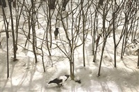trees & crows 36 by abbas kiarostami