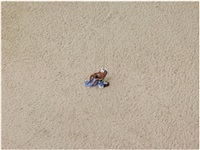 untitled (february 12, 2012 12:56pm) by richard misrach