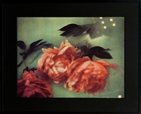 floating flowers by karl lagerfeld