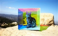 untitled (cat in box) by tierney gearon