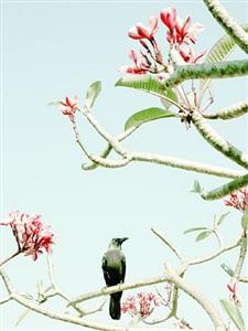 crow by philipp keel