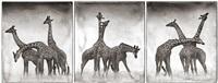 giraffe triptych by nick brandt
