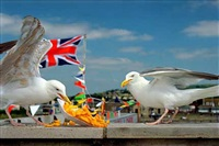 west bay by martin parr