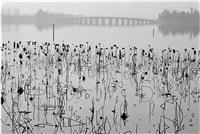 china. beijing. 1964.