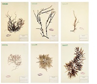 herbarium by mark dion