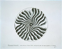 elizabeth blackwell - line drawing plate study by judy chicago