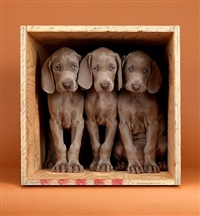 count three by william wegman