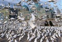 blue mosque, mazar e sharif by steve mccurry