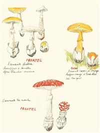 ma collection de champignons bons et de champignons mortels by annette messager