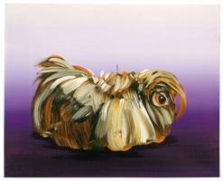 meerschweinchen by cornelius völker