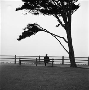 untitled (figure sitting beneath tree) by vivian maier