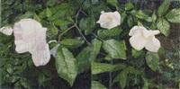 rose by jennifer bartlett