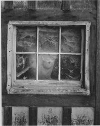 nude behind cobwebbed window by wynn bullock