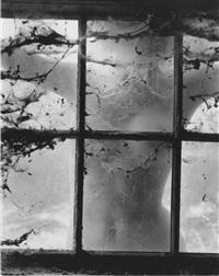 woman behind cobwebs by wynn bullock