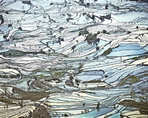 rice terraces, (laohuzui ii), yunnan, china by david burdeny