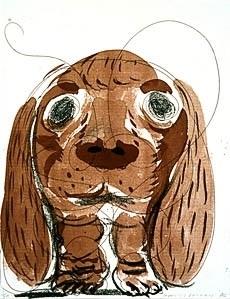 stanley at 8 weeks, october by david hockney