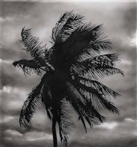 study of palm 6/5/14 by robert longo