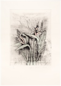 strelitzia, from temple of flora by jim dine