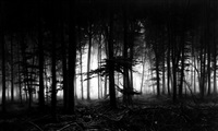 untitled (forest of doxa) by robert longo