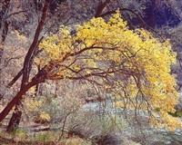 golden river cottonwood, utah by christopher burkett