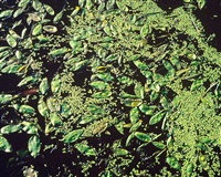 green leaf flotilla, connecticut by christopher burkett