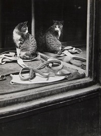 untitled, city cat by brassaï