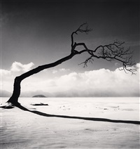 kussharo lake tree, study 10, kotan, hokkaido, japan by michael kenna