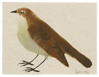 little bird by mary fedden