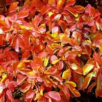 pastel orange leaves and raindrops, new york by christopher burkett